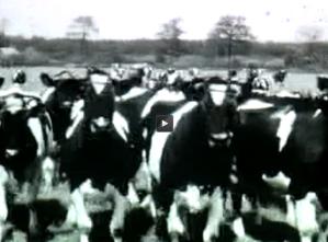 Still uit audiovisueel materiaal van het Drents Archief.